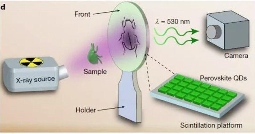 新型石墨烯-钙钛矿X射线探测器